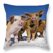 Piglets In Snow Throw Pillow