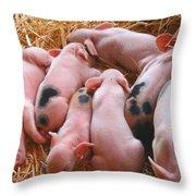 Piglets Throw Pillow