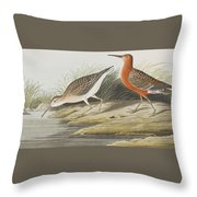 Pigmy Curlew Throw Pillow