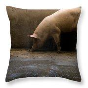 Pigs At A Hog Farm In Kansas Throw Pillow