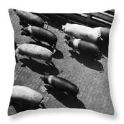 Pigs Being Corralled Throw Pillow