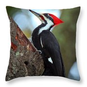 Pilated Woodpecker Throw Pillow