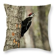 Pileated About To Take Flight Throw Pillow