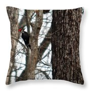 Pileated Billed Woodpecker Throw Pillow