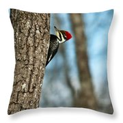 Pileated Billed Woodpecker Pecking 2 Throw Pillow