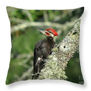 Pileated Perch Throw Pillow