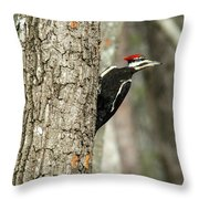 Pileated Searching - Looking Throw Pillow