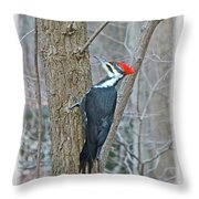 Pileated Woodpecker - Dryocopus Pileatus Throw Pillow