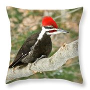 Pileated Woodpecker 6073 Throw Pillow