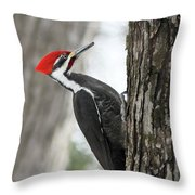 Pileated Woodpecker In Spring Throw Pillow