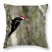 Pileated Woodpecker Looking For A Perspective Mate Throw Pillow