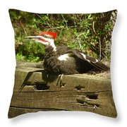 Pileated Woodpecker1 Throw Pillow