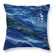 Pilot Whale 4 Throw Pillow