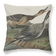 Pin-tailed Duck Throw Pillow