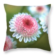 Pincushion Flowers Throw Pillow by Kathy Yates