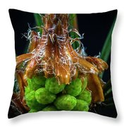 Pine Cone Focus Stack Throw Pillow