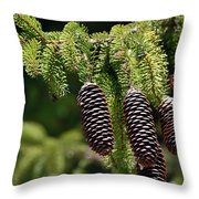 Pine Cones On The Bough Throw Pillow