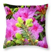 Pine Conifer Art Print Pink Azaleas Flower Garden Baslee Troutman Throw Pillow