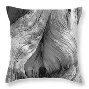Pine, Split Trunk, Sierra Nevada Mountains, Ca Throw Pillow