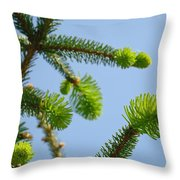 Pine Tree Branches Art Prints Blue Sky Botanical Baslee Troutman Throw Pillow