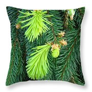 Pine Tree Branches Art Prints Conifer Forest Baslee Troutman Throw Pillow