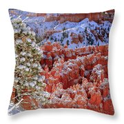 Pine Tree In Bryce Canyon Throw Pillow