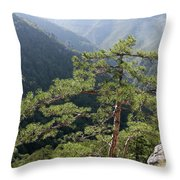 Pine Tree On Mountain Landscape Throw Pillow