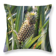 pineapple plantation in Kerala - India Throw Pillow