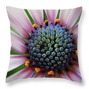 Pink African Daisy Detail Throw Pillow
