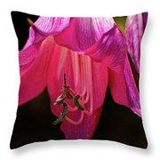 Pink Aglow Throw Pillow