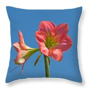 Pink Amaryllis Flowering In Spring Throw Pillow