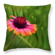 Pink And Orange Wild Daisy Throw Pillow