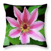 Pink And White Clematis Throw Pillow