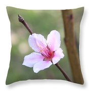 Pink And White Nectarine Blossom Throw Pillow
