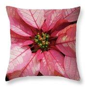 Pink And White Poinsettia Throw Pillow