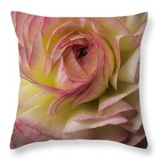 Pink And White Ranunculus Throw Pillow