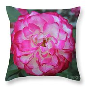 Pink And White Rose Square Throw Pillow