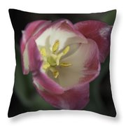 Pink And White Tulip Center Squared 2 Throw Pillow