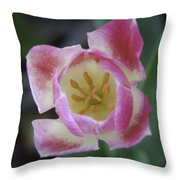 Pink And White Tulip Center Squared Throw Pillow