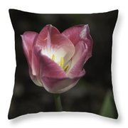 Pink And White Tulip Squared 2 Throw Pillow