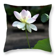 Pink And White Water Lily With Green Pod Throw Pillow
