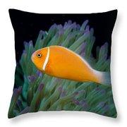 Pink Anemonefish Throw Pillow