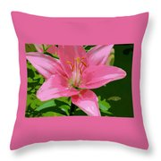 Pink Asiatic Lily Throw Pillow