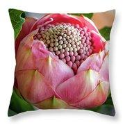 Pink Bud Waratah Throw Pillow
