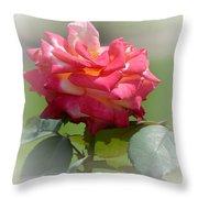 Pink Chiffon Ruffles Throw Pillow