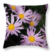 Pink Clara Curtis Daisy Chrysanthemum Throw Pillow