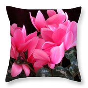Pink Cyclamen 2  Throw Pillow