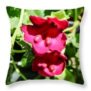 Pink Creeping Gloxinia Throw Pillow