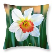 Pink Cup Solo Daffodil Throw Pillow