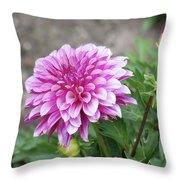 Pink Dahlia 2  Throw Pillow